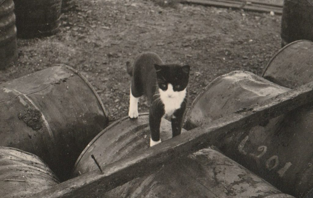 Katt på hett tranfat